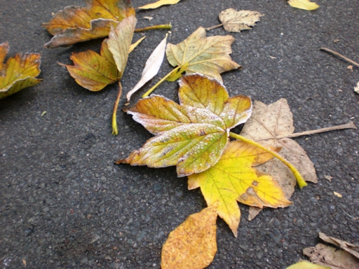08autumnleaves_1.JPG